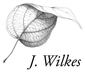 leaf_logo2